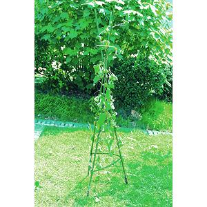 GTCN-24-07 GREEN APPLE Опора для томатов 1,5м